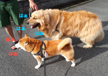 IMG070114-2.png