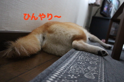 IMG_8186.jpg