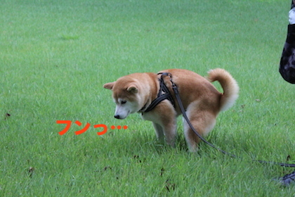 IMG_9233.jpg