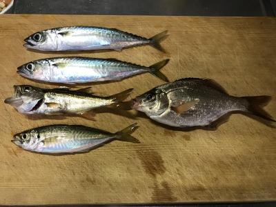2019年7月7日 釣れた魚種