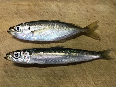 2019年7月28日 釣れた魚種