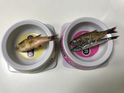 兄妹猫の朝食は釣りたてのネンブツダイ・ムツ・カタクチイワシを焼いたもの