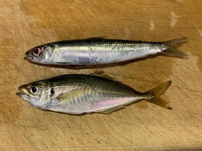 2019年8月14日 釣れた魚種