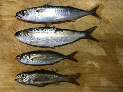 2019年7月15日 釣れた魚種