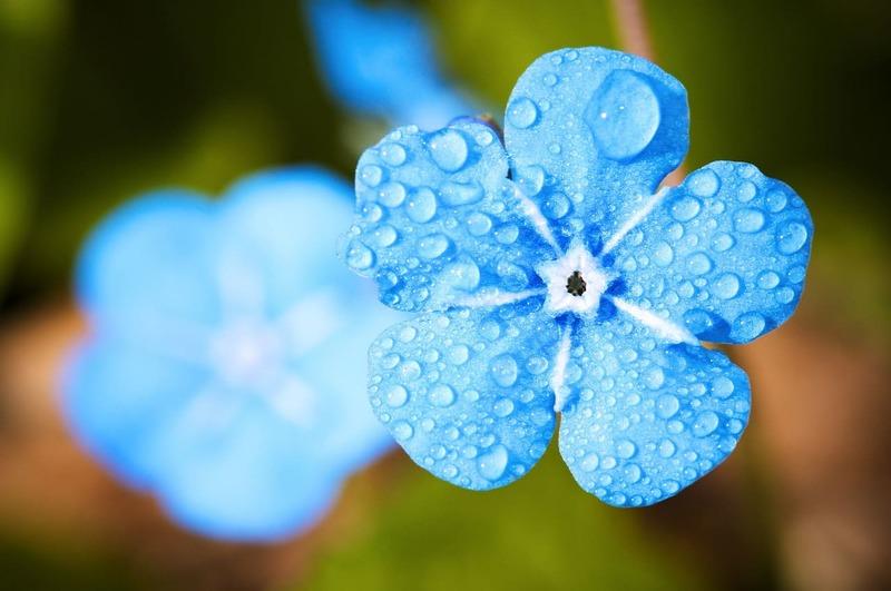 flower-2197679_1280 (1)