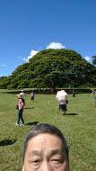 20190710_日立の樹