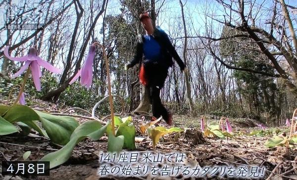 3米山カタクリ