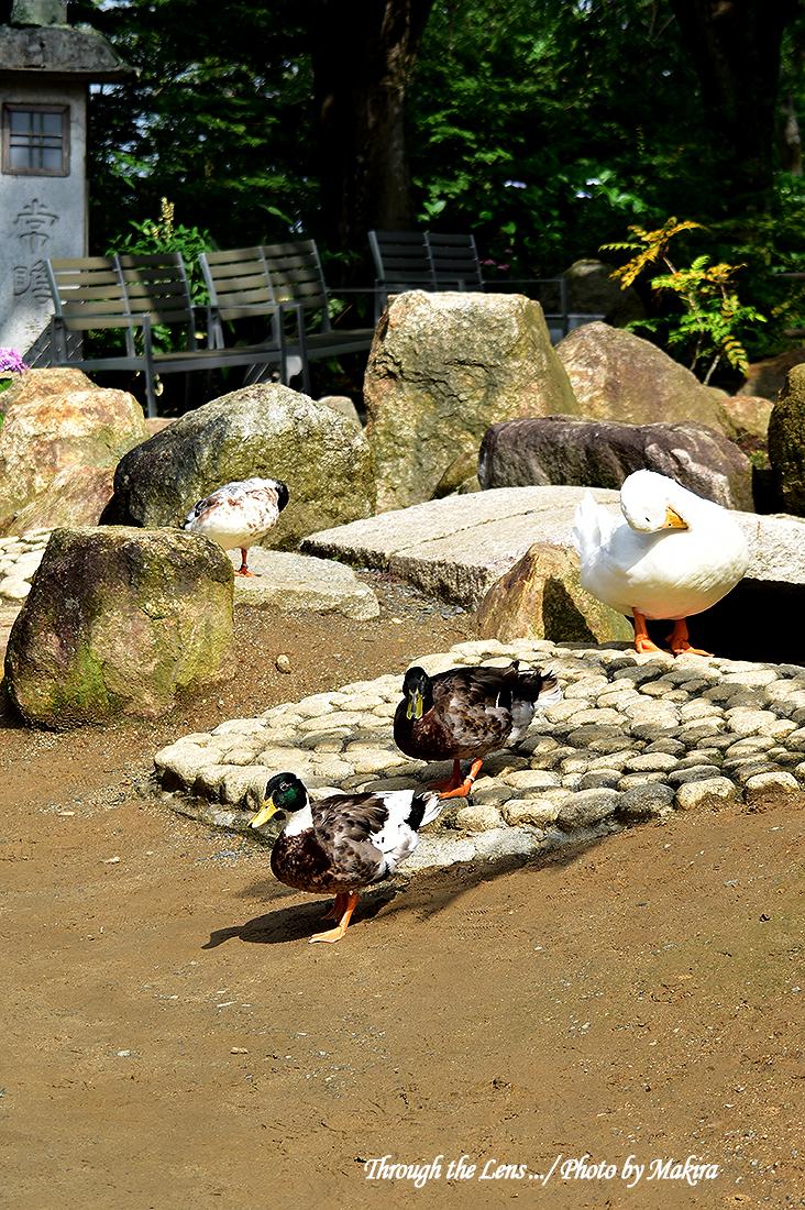 境内の鳥たち56D4
