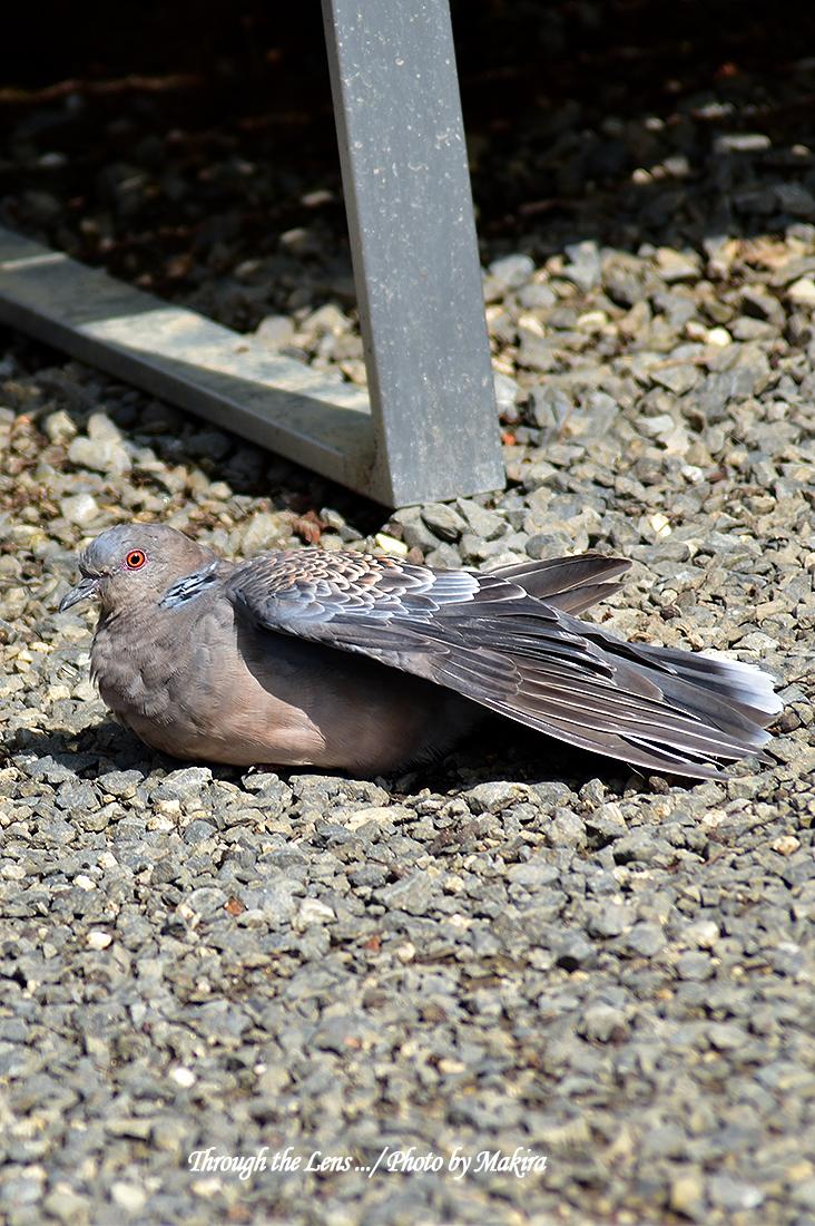 境内の鳥たち56D6