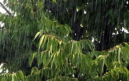 雨はきらいじゃないけど 湿度は苦手 2
