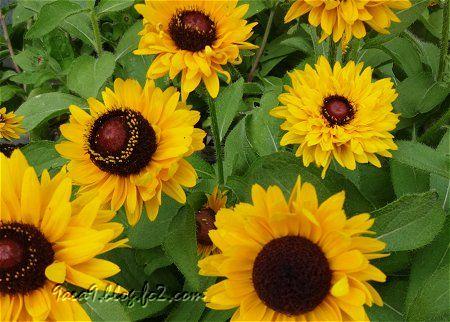 今日のお花は 黄色 2