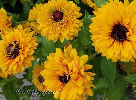 今日のお花は 黄色 3