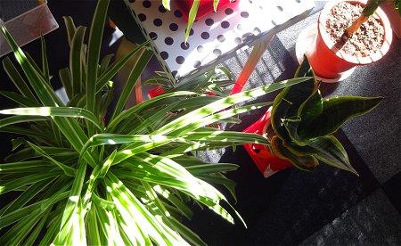 つゆはいつ開けるのかな 植物 1