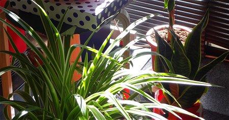 つゆはいつ開けるのかな 植物 2
