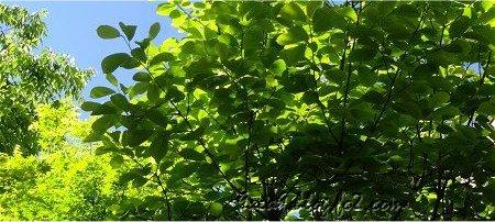 緑 新緑 空 葉っぱ