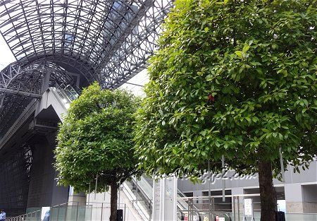 京都駅の中の緑 空中経路の手前