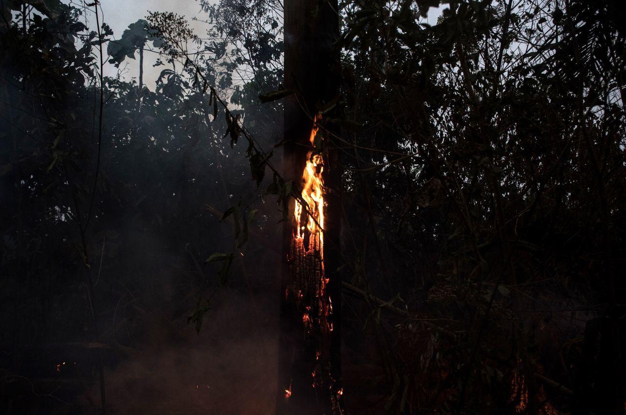 昨シーズンだけでも、アマゾンから約200万エーカー(上海よりも広い)の森林が消滅してしまいました。