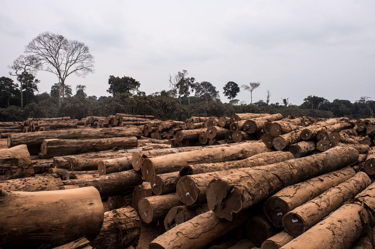 2001年から2015年にグローバル・フォレスト・ウォッチが行った分析によると、森林破壊の原因は、主に森林や灌木地を農地に転用したためです。
