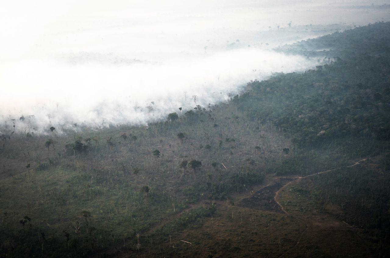 木材の商品化のための森林伐採が急速に進む森林破壊の主な原因です。
