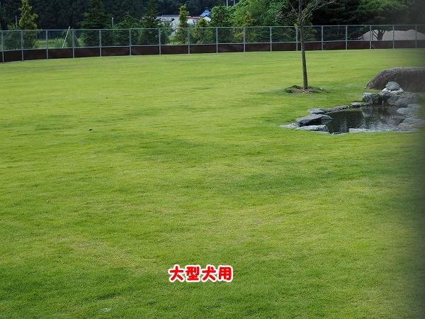 s-P8250024.jpg