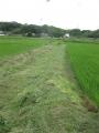R1.7.13あいちのかおり畦の草刈り(NO.2田)@IMG_8688