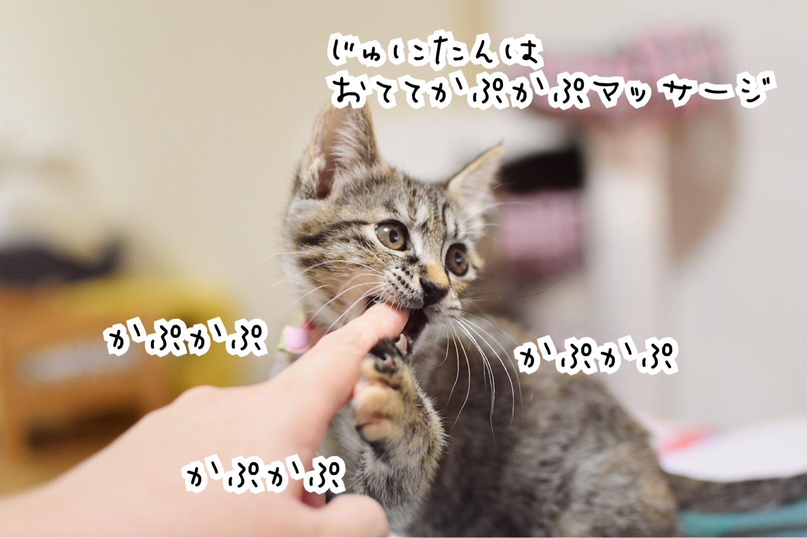 fc2blog_20190802092624169.jpg