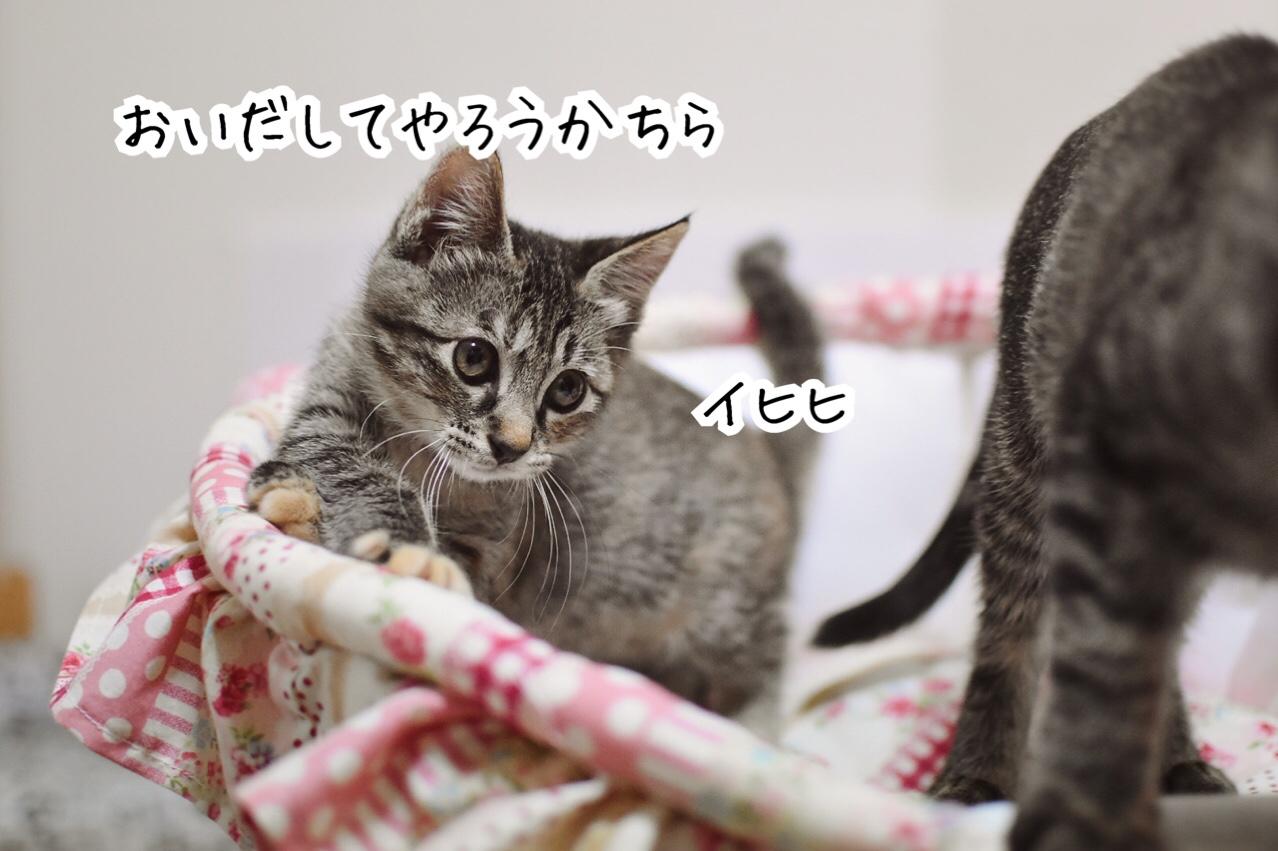 fc2blog_20190807002613e9d.jpg