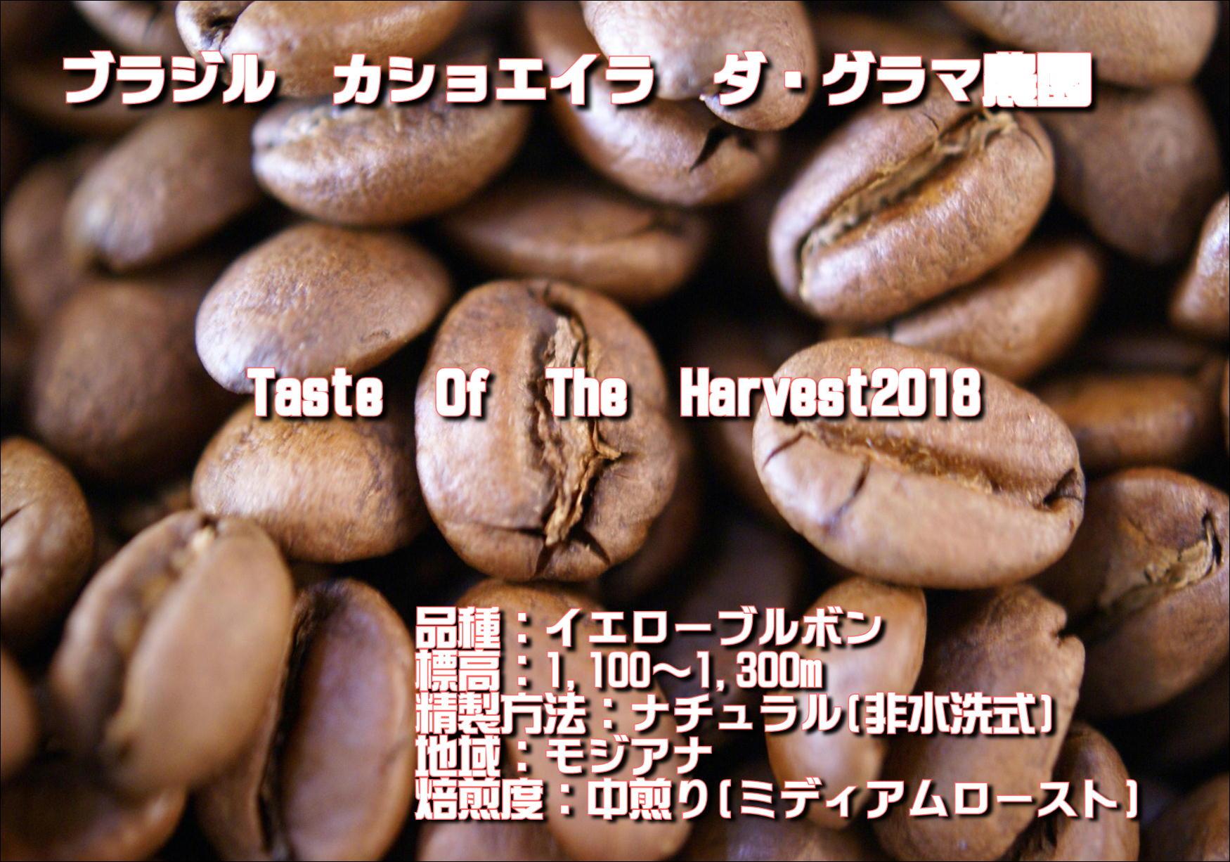 ブラジル カショエイラ豆画像