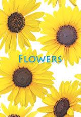 Flowers-15