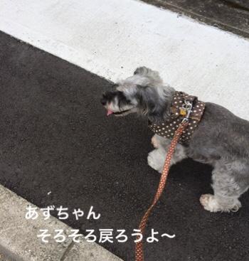 fc2blog_201908171008017e3.jpg
