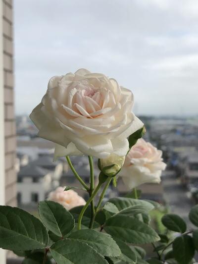 ブログ0727粉粧楼