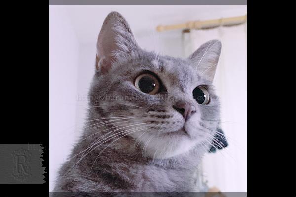 チコ 猫 20190716