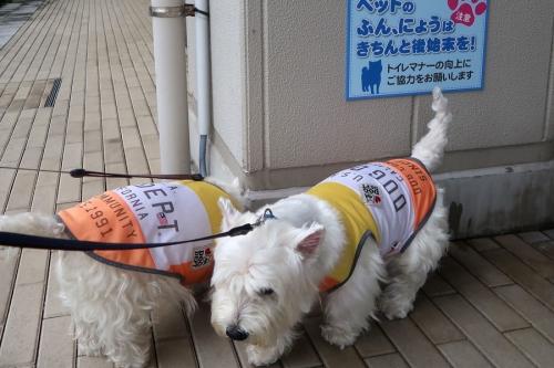 shujituameyohoudattanodedekake4.jpg
