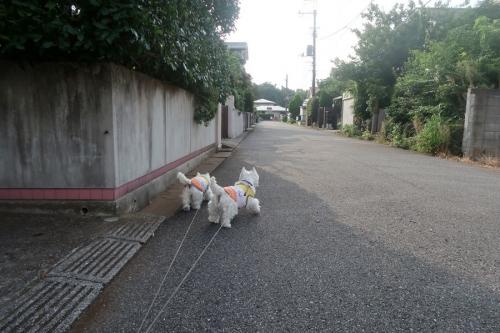 yoakejikokugaosokunattekitane1.jpg