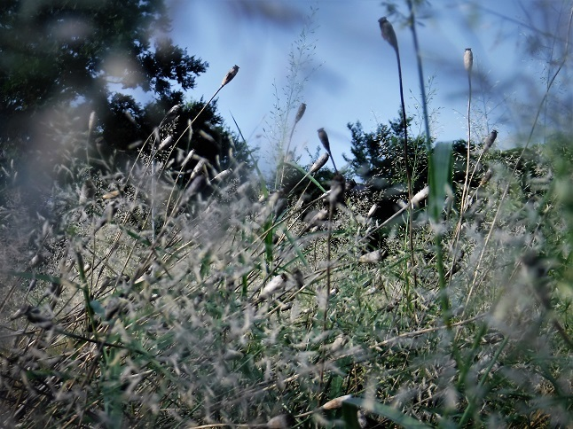 1 19.8.17 散歩、映画「黒い河」「赤い殺意」 (27)