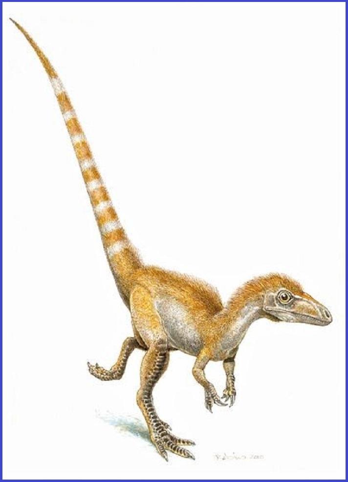 025721_big-cb1264619669 Sinosauropteryx (2)