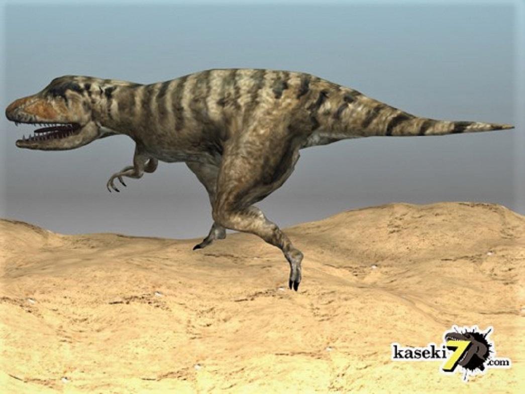 pic2 タルボサウルス (2)
