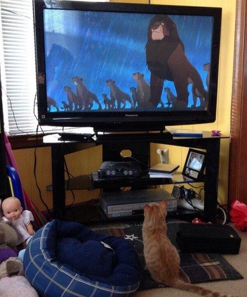 猫ちゃんもライオンキングに夢中