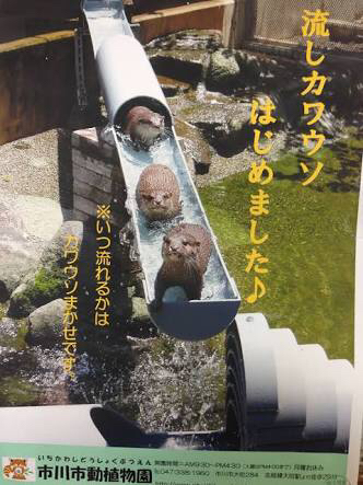 流しカワウソはじめましたポスター(市川市動植物園)
