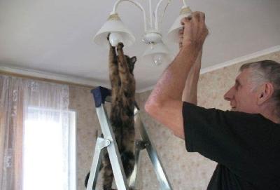 電球を取り換えてくれるの?ネコ