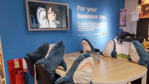 10IKEAのショールームでサメ談義