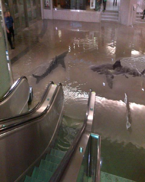 4コラなのか…ショッピングモール水浸しでサメがウヨウヨ