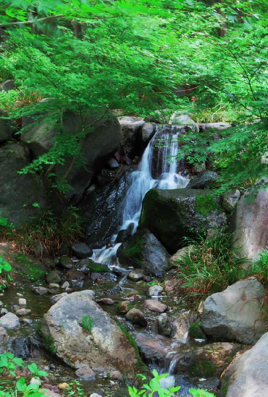 日本庭園-587