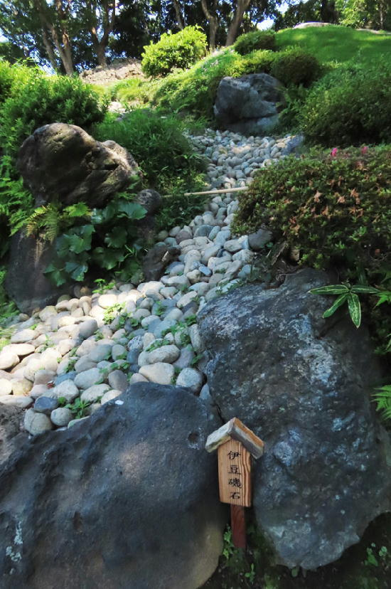 伊豆磯石-868