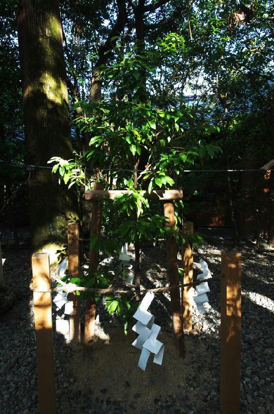 招霊の木-297