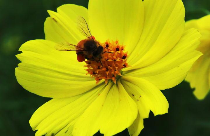 蜜蜂-204-2