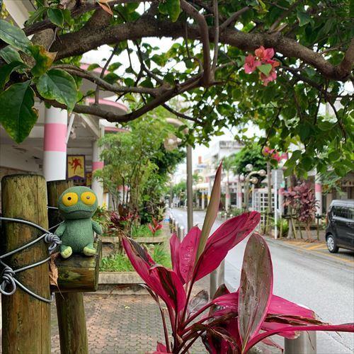 ゆうブログケロブログ沖縄2019 (77)