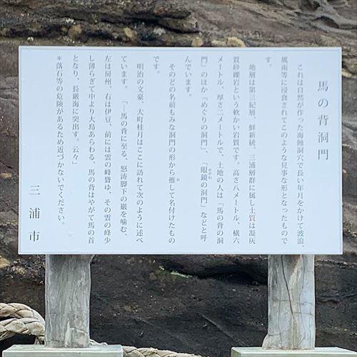 ゆうブログケロブログみさきまぐろきっぷ2019 (20)