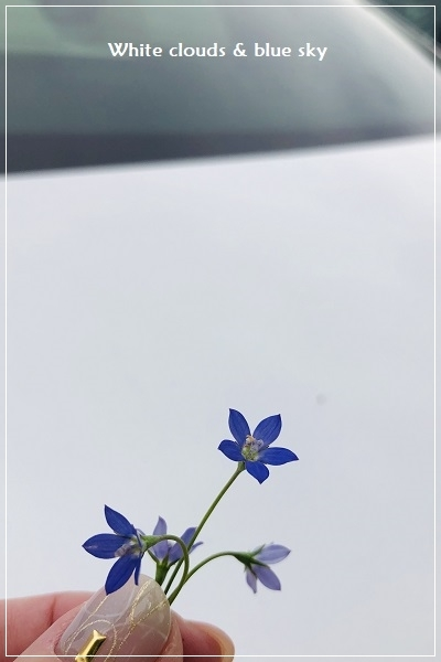 IMG_E0676-1.jpg