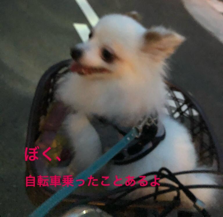 fc2blog_20190803155049a7f.jpg
